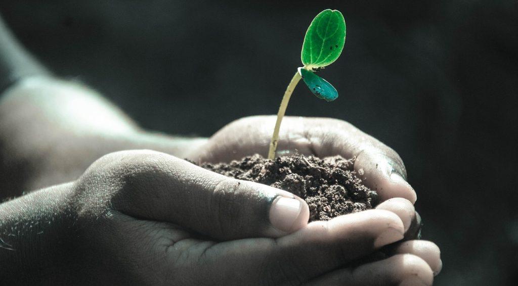 Pflanzenkeim in der Hand