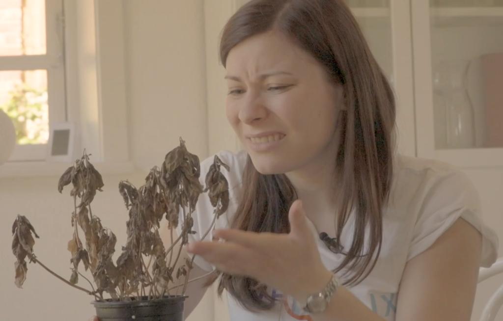 Wieso ist Steffies Pflanze vertrocknet?